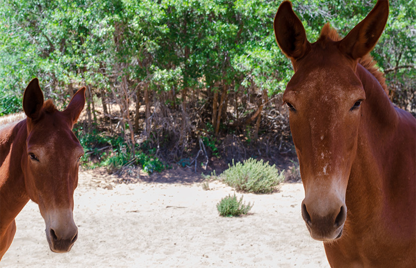 Fiero (r) and timid Lucky
