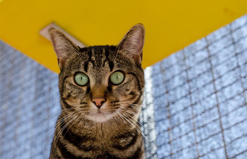 Bright eyed Natalie the tabby cat.