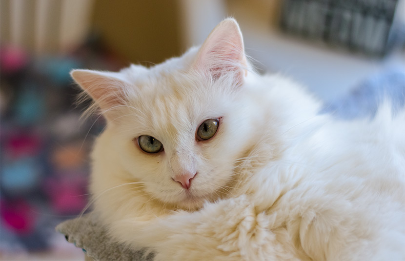Soft and sweet, Zima is ready to go home.