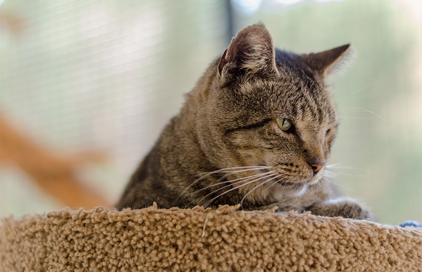 Campbell is a loving cat looking for a home.