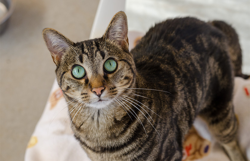 Tabby Natalie has soft fur and bright green eyes