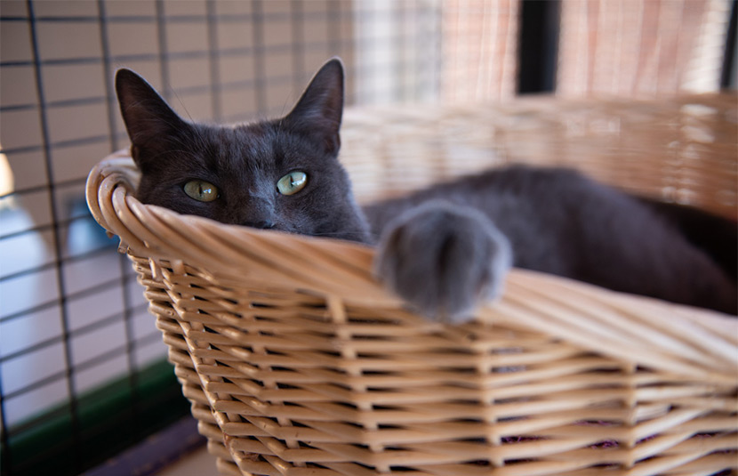 Ufro resting in a basket