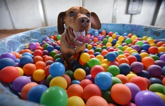 Dru loves to play in the ball pit at Tara's run