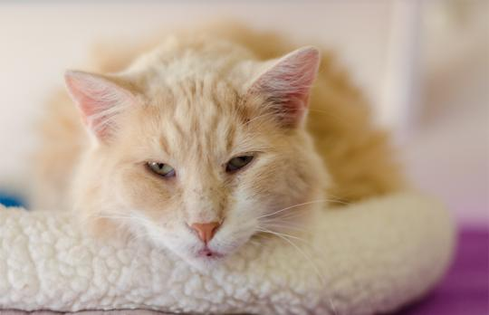 Fluffy Furgus is waiting for a home.