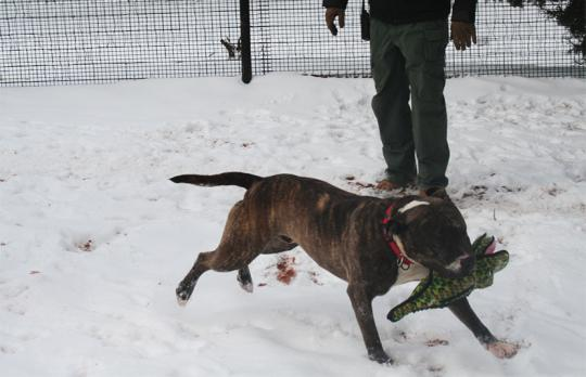 Legion romps in the snow with a new toy.